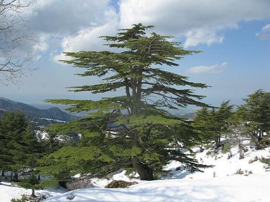 wildest-trails-of-lebanon_3
